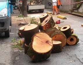 alberi_tagliati